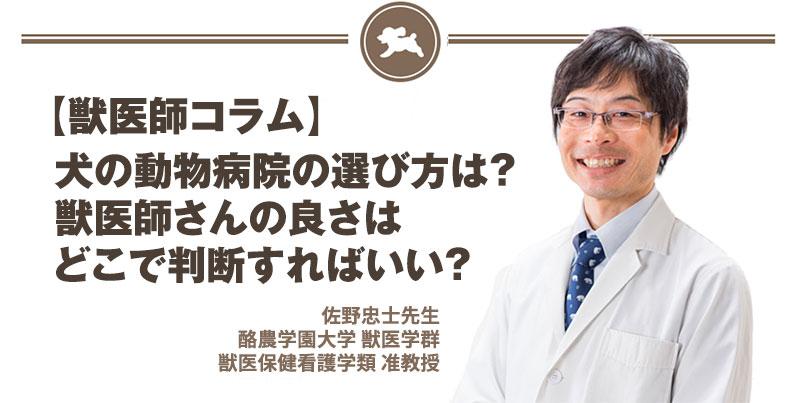犬の動物病院の選び方は?獣医師さんの良さはどこで判断すればいい?