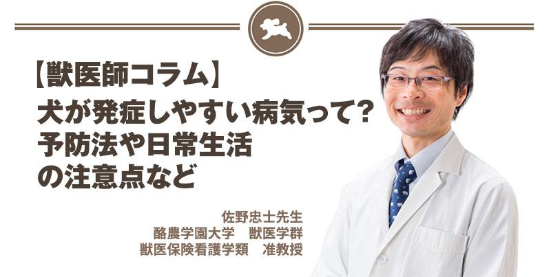 【獣医師コラム File:2】犬が発症しやすい病気って?予防法や日常生活の注意点など