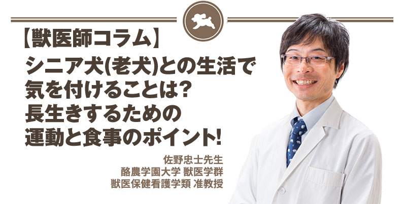 【獣医師コラム File:3】シニア犬(老犬)との生活で気を付けることは?長生きするための運動と食事のポイント!