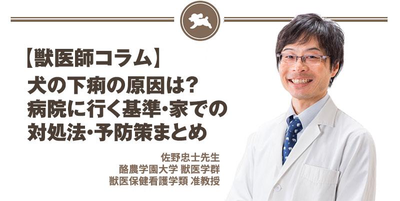 【獣医師コラム File:10】犬の下痢の原因は?病院に行く基準・家での対処法・予防策まとめ