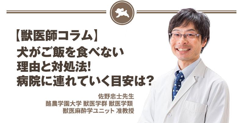 【獣医師コラム File:11】犬がご飯を食べない理由と対処法!病院に連れていく目安は?