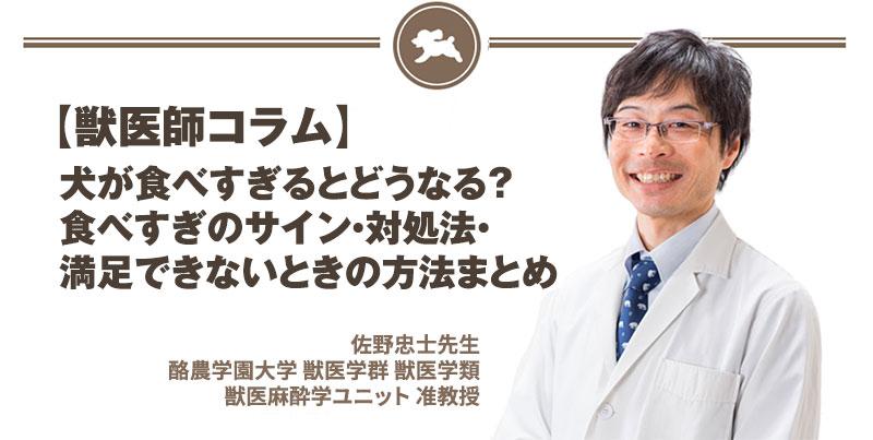 【獣医師コラム File:12】犬が食べすぎるとどうなる?食べすぎのサイン・対処法・満足できないときの方法まとめ