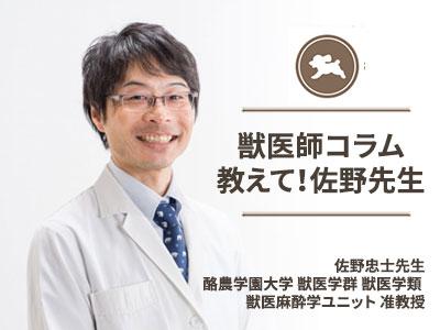 獣医師コラム 教えて佐野先生