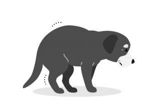 【獣医師コラム File:13】犬が震える原因は?