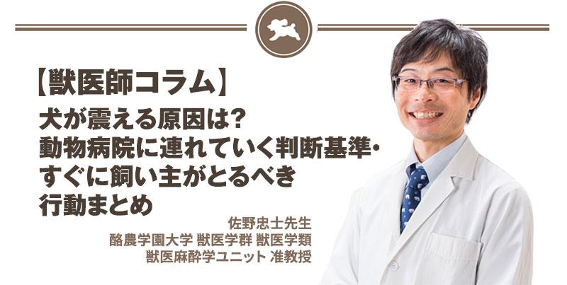 【獣医師コラム File:13】犬が震える原因は?動物病院に連れていく判断基準・すぐに飼い主がとるべき行動まとめ