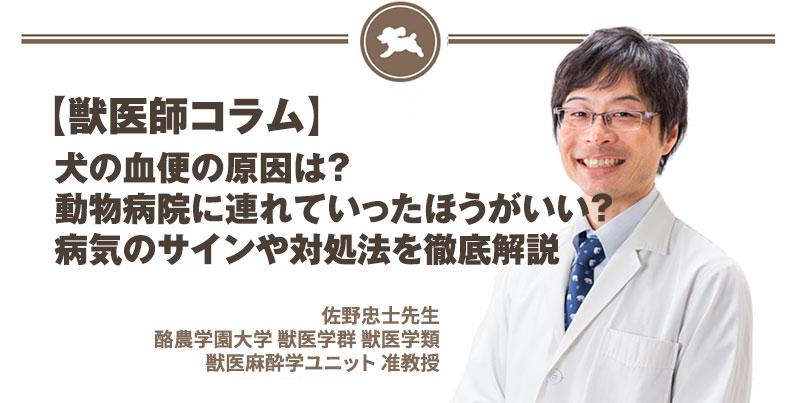 【獣医師コラム File:14】犬の血便の原因は?動物病院に連れていったほうがいい?病気のサインや対処法を徹底解説