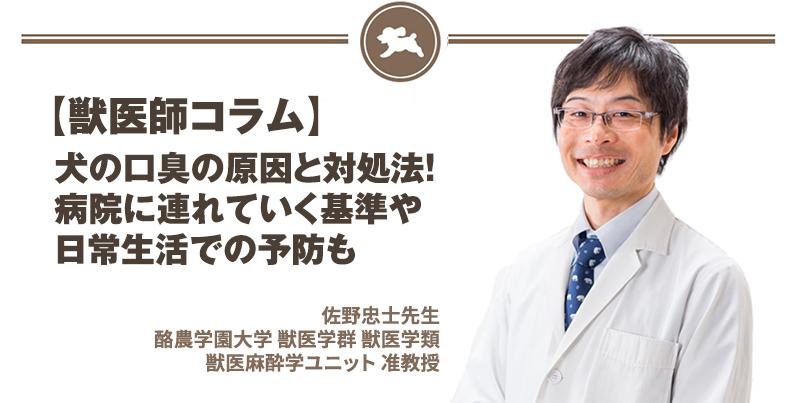 【獣医師コラム File:15】犬の口臭の原因と対処法!病院に連れていく基準や日常生活での予防も