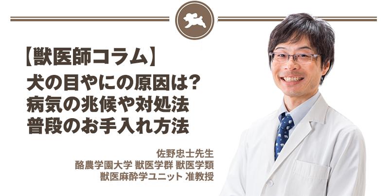 【獣医師コラム File:16】犬の目やにの原因は?病気の兆候や対処法・普段のお手入れ方法