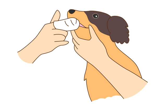 犬の口臭の対処・予防法~おうちでのケア~