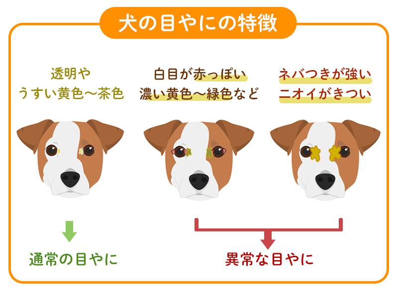 犬の目やにの原因
